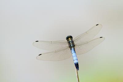 стрекоза природа насекомые макро