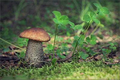 Дары лета.. гриб природа