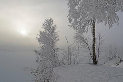 Ожидание. зима туман солнце