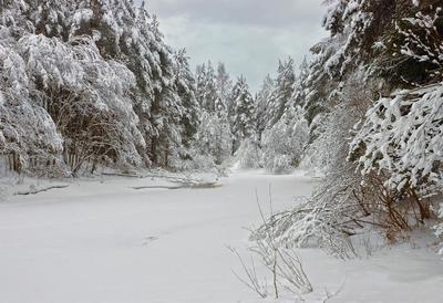 Зима в средней полосе зима река лес снег деревья небо