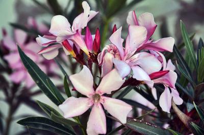 Flowers цветы зелень розовый