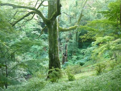 *** дерево природа