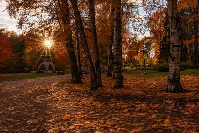 Осенним днём... Санкт-Петербург парк осень