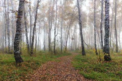 *** Осень октябрь утро пейзаж