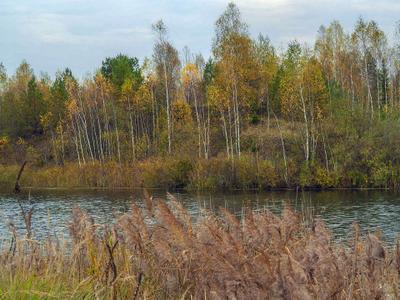 Теплый октябрь вода тростник деревья