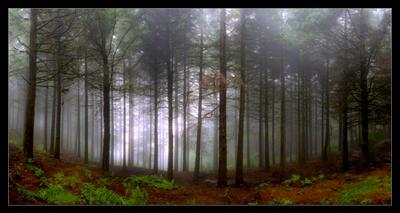 В темно-синем лесу... Португалия, Мадейра, лес, дождь, туман