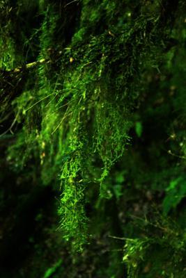листва природа листва