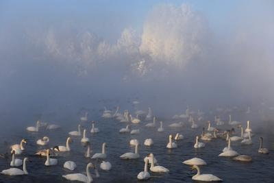 Сказка озера Светлого Алтайский край село Урожайное озеро Светлое лебеди