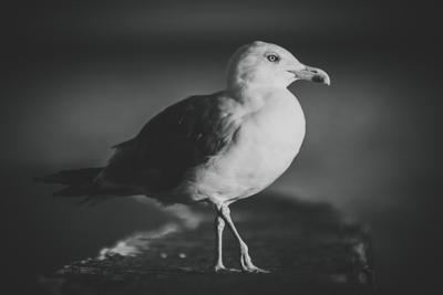 gull чайка чайки птица птицы клюв