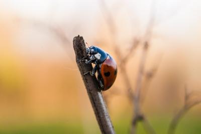 *** насекомые жук