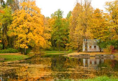 Буря красок осень пейзаж парк краски цвет autumn landscape park color