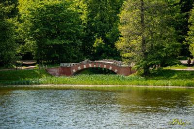 Горбатый мост мост парк Кузьминки пруд природа пейзаж