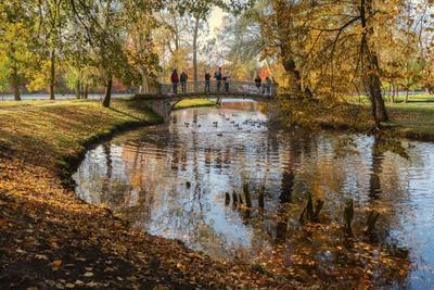 Гатчинская осень гатчина осень парк пруд мост