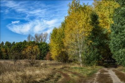 *** осень пейзаж