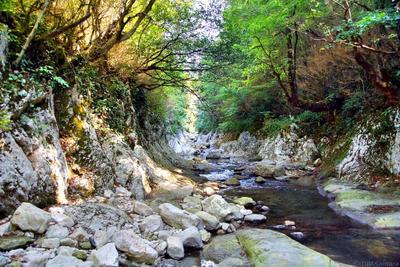 Где-то в Абхазии абхазия горы достопримечательность кавказ камни лес осень пейзаж природа путешествие река
