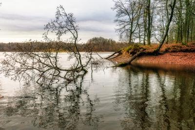 О грустном осень озеро деревья