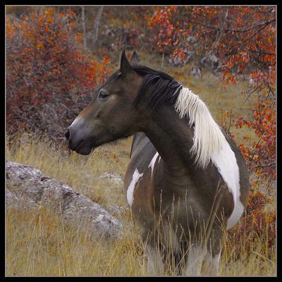 konj конь Лика осень
