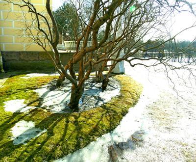 Природа тени..... начало весны