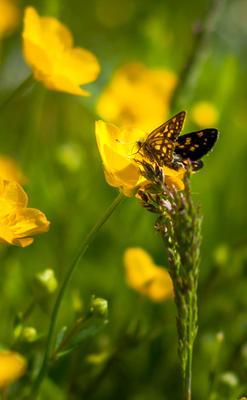 Опыляем бабочка цветы желтый лето