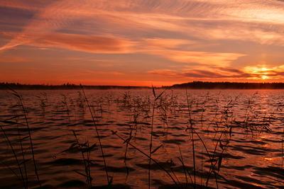 Карелия пробуждается озеро рассвет отражение трава вода небо облака
