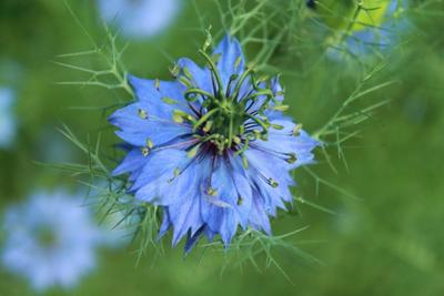 *** цветы лето flowers summer