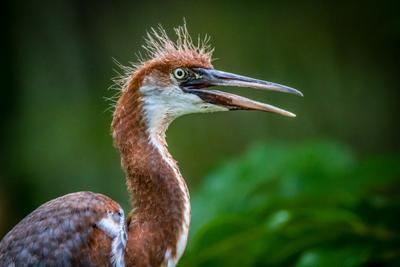 Птиц птица глаз животное