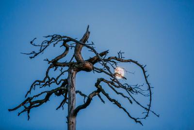 Луна и дерево.