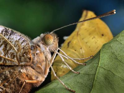 с днём рождения бабочка куколка листик рождение