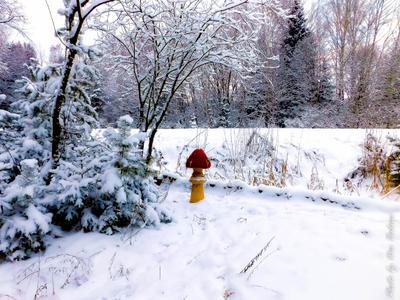 Зимний гриб Зима лес дорога снег