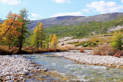 О чем расскажут северные реки... река сопка лиственницы берег камни небо вода
