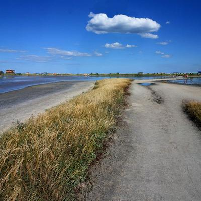песчаная дорога  лиман, море, коса, дорога, песок, трава, небо, облака, люди, лето, лечебная грязь домики
