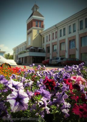 Лето в родном городе лето цветы город