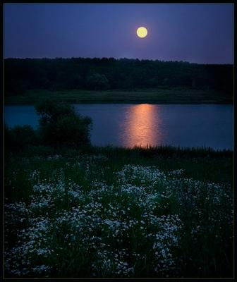 Луна и ромашки