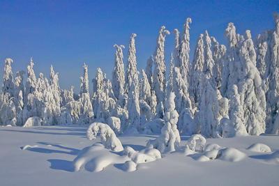 Зимний сон*** снег зима лес