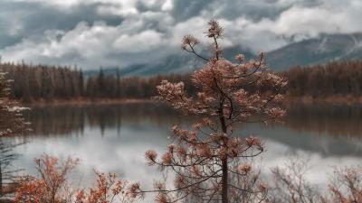 практически портрет :) Канада Альберта пейзаж дерево 1pro.photo