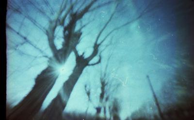 без названия солнце, деревья, небо