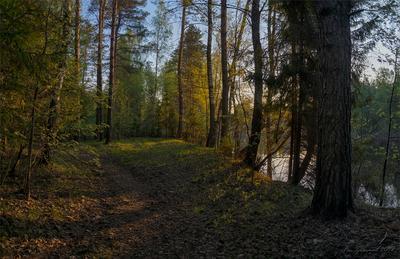 Пробуждение пейзаж лес утро восход