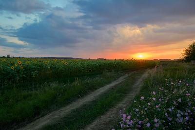 Дорога домой... Лето август вечер поле дорога