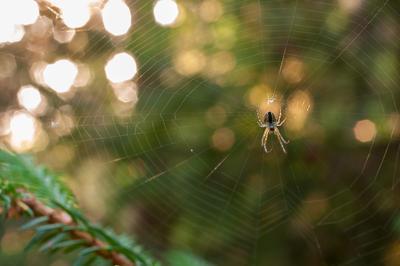 Вечерняя охота паук вечер паутина бокэ