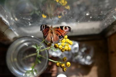 """""""Зарайские бабочки, мидии и жуки"""""""