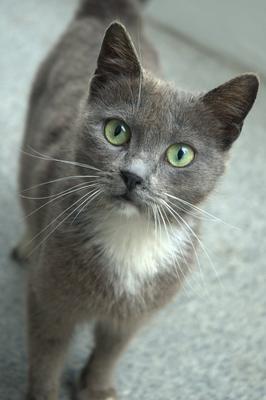 Вопрос... кошка взгляд