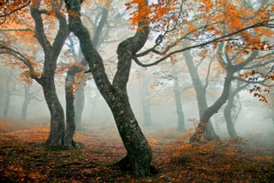 """***Осенний вальс """" Бостон"""" Осень туман грабы"""