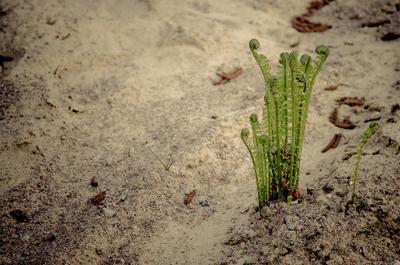 Вырос Папортник, песок