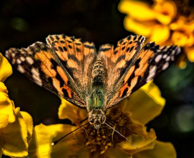 Экраноплан бабочка крылья цветок перламутровка