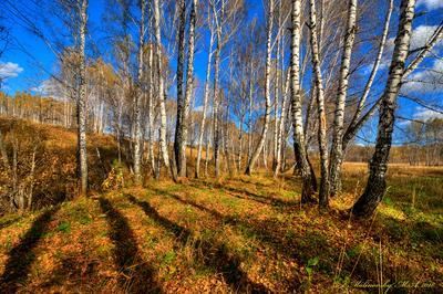 Яркий день в сентябре пейзаж природа осень лето новосибирск лес облака фотообои