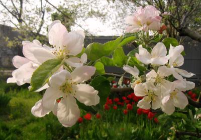 Утро весна дома сад