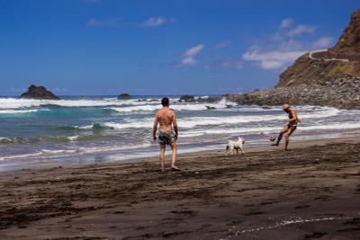 Пляжный футбол с питбулем пляж питбуль отдых футбол