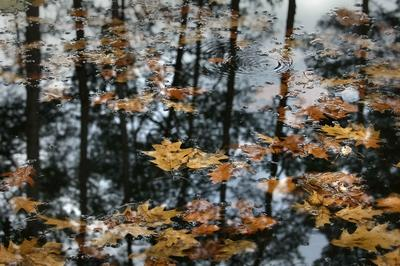 Водомерка и осень. жёлтые листья пруд водомерка осень