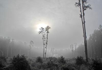 Сказочный лес Лес сумерки
