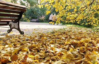Осенняя грусть осень